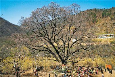 高陵阳光森林公园图片